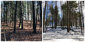 before and after of tree removal on Saint Anselm College campus